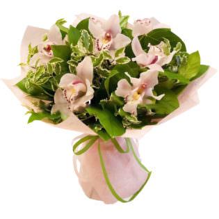Орхидея светло розовая